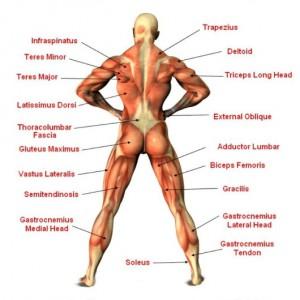 vrouwen spieren 2