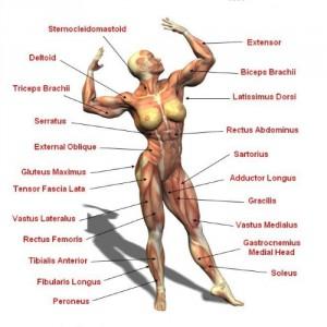 vrouwen spieren